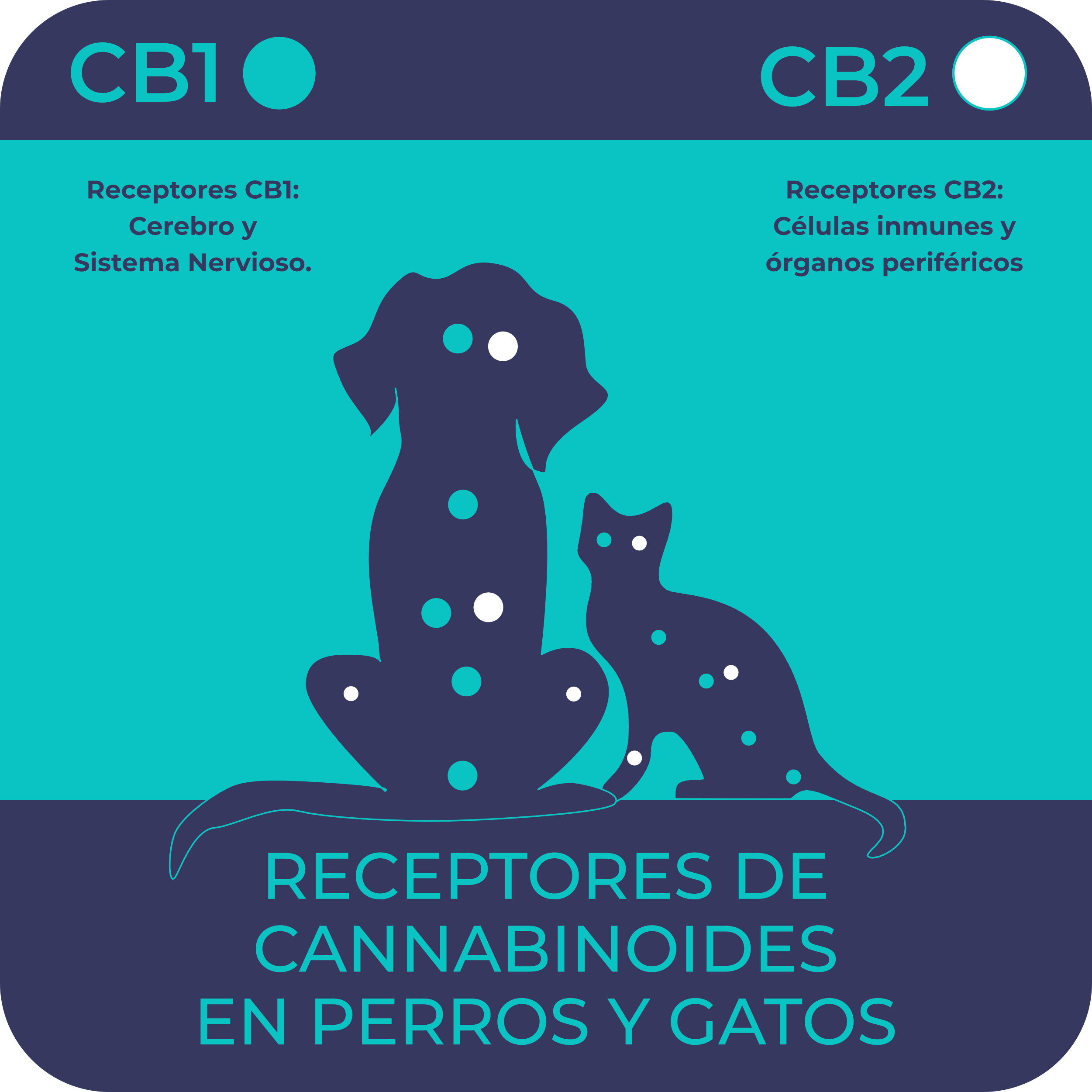 aceite de cbd para perros y gatos